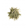 Herboristerie De Paris Eucalyptus feuilles longues entières bio tisane 100gr Herboristerie De Paris