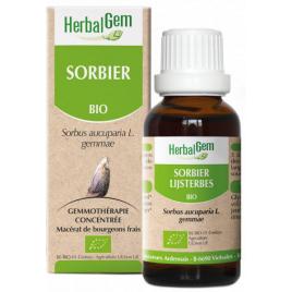 Herbalgem Gemmobase Sorbier bio Flacon compte gouttes 50ml Herbalgem Gemmobase Accueil Onaturel.fr