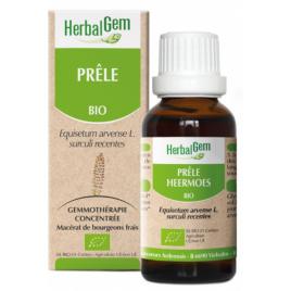 Herbalgem Gemmobase Prêle bio Flacon compte gouttes 50ml Herbalgem Gemmobase Accueil Onaturel.fr